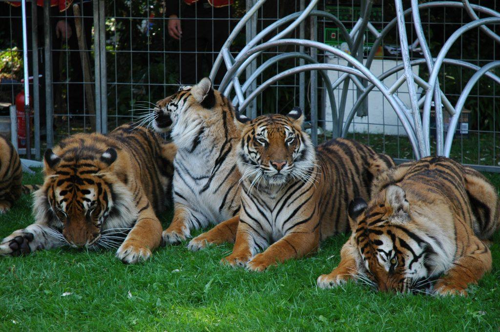 Le zoo à la maison